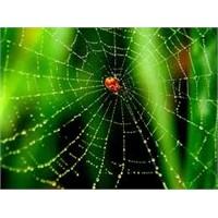 Örümcek Ağının Özelliği Nedir?