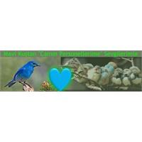 Mavi Kuştan Yenilikçi Motivasyon Teknikleri