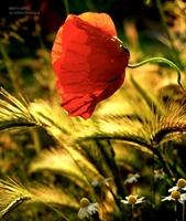Doğal Yaşamdan Güzel Çiçek Fotoğrafları