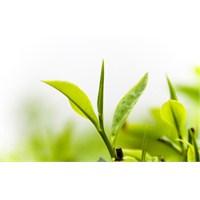 Yeşil Çay Bilinçli Tüketildiğinde Sayısız Faydaya
