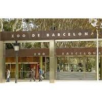 Barselona Hayvanat Bahçesi İle İlgili Herşey
