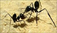 Yağmurda Karıncalara Neden Birşey Olmaz?