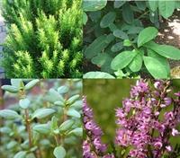 Cilt Bakımınız İçin En Güzel Şifalı Bitkiler
