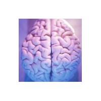 Beyin Çalıştırma Teknikleri
