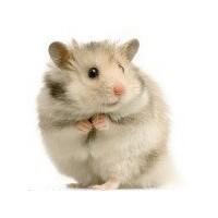 Hamster Beslenmesi Ve Bakımı