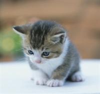 Bir Kedi Daha ...