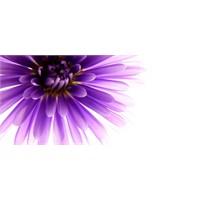 Güzel Bir Çiçek Buketi Yapmak İçin 7 İpucu