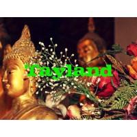 Tayland Neden Evim Oldu?