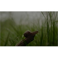 """Yeni Video: Sigur Ros """"Ekki Mukk"""""""