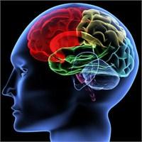 Beyni Besleyen Besinler