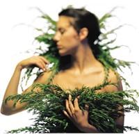 Domuz Gribi İçin Şifalı Bitkiler