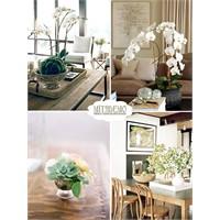 Evinizde Çiçekler