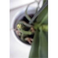 Tüm Pozitif Enerjim Orkideme