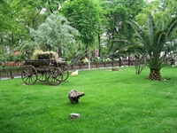 Yeşilköy Sahili Ve Röne Park