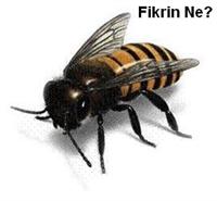 Bal Arılarında Mutasyon
