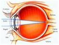 Göz Hastalıkları İçin Şifalı Bitkiler