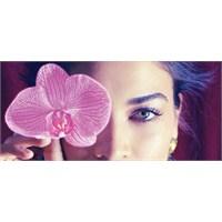 Yılın Rengi : Orkide Moru