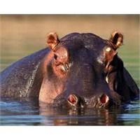 Benim Hipopotam Ruhum