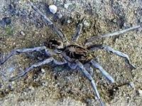 İlginç Örümcek