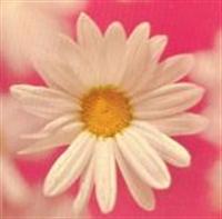 Duvarlarınız Çiçek Açıyo