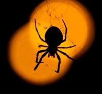 Hayalimdeki Örümceğin Mucizesi