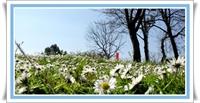 Ülkemizde 11 Bin Çeşit Bitki Var