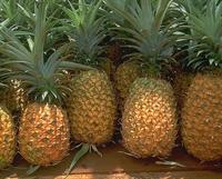 Ananaslı Meyve Salatası