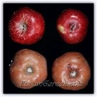 Çürüyen Meyve Neden Kahverengiye Dönüşür?