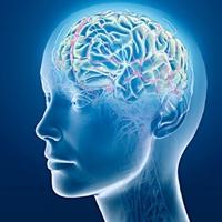 Nörobik İle Beyninizi Zinde Ve Genç Tutun!