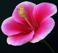 Çiçek (botanik) Nedir?