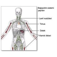 Bağışıklığı Artırmanın 10 Yolu