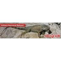 Ankara Hayvanat Bahçesi – Atatürk Orman Çiftliği