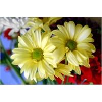 Burçlar Ve Çiçekler