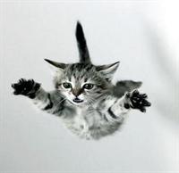 Kediler Neden Hep Dört Ayak Üstüne Düşer ?