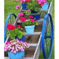 Bahçe Çiçekleri Ve İsimleri