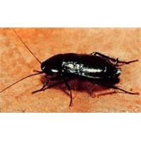 Evde Böceklerle Doğru Mücadele Yöntemleri