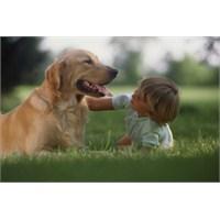 Evcil Hayvanlar Alerjiye Neden Olabilir