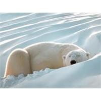 Hayvanlar Niçin Kış Uykusuna Yatar?