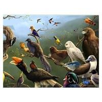Dinazorun Evrimle Kuşa Dönüşme Masalı