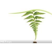 Bitkisel Tedavide Büyük Tehdit