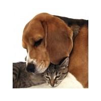 Evcil Hayvanınız Ve Kişiliğiniz