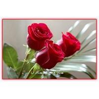 Güllerin Sayısı, Anlamı Ve Önemi