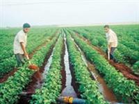 İzmirde 6 Bin Çiftçinin Elektriği Kesik
