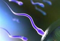 Dört Dörtlük Spermin Sırrı