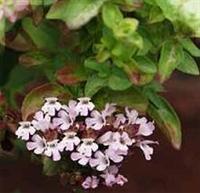 Sinirlerinizi Yumuşatacak Harika Bitki....