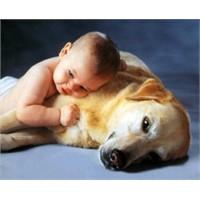 Çocuklar Hayvan Korkusunu Nasıl Aşar?