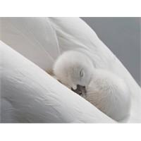 İç Dünyama Kuş Bakışı