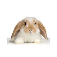 Tavşan Beslenmesi Ve Bakımı