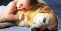 Bebekler Köpekleri Anlayabiliyormuş