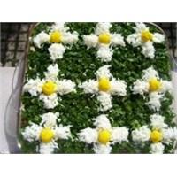 Papatya Salatası Tarifim